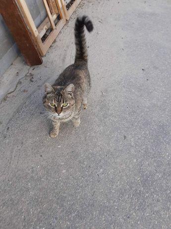 Пропала кошка .ул Мира 80