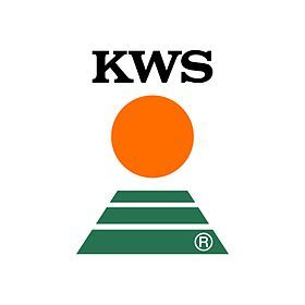 Kukurydza KWS F1, Beatus, Ambrosini ,Agro Yoko , Figaro, Ronaldinio..