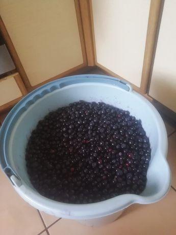 Sprzedam świeże jagody
