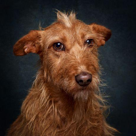 Edileuza - cadela já esterilizada