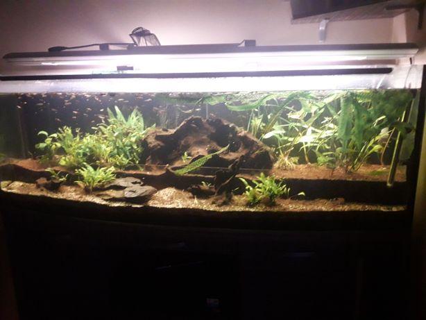 Akwarium 375 L z całym zestawem