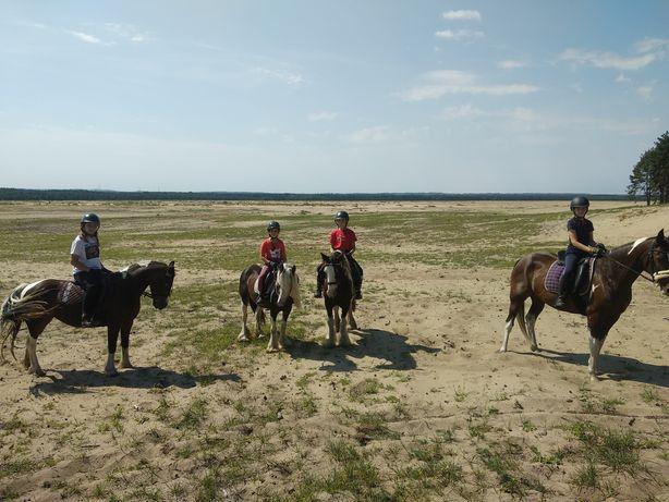Jazda konna, nauka jazdy konnej, tereny, rajdy po pustyni błędowskiej