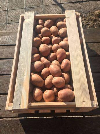 Посадочный картофель. Репродукционный материал