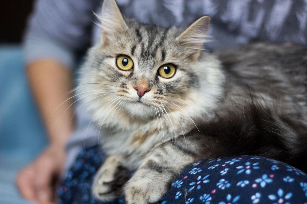 Котенок в хорошие руки Киев - изображение 1