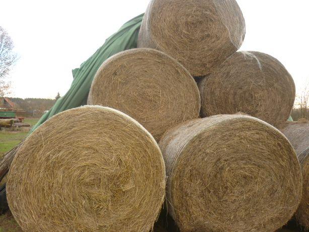 Siano [Bale/Bele] suche, ponad 150 średnica,z zładunkiem.