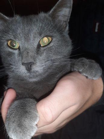 Продам кота уникальный вид