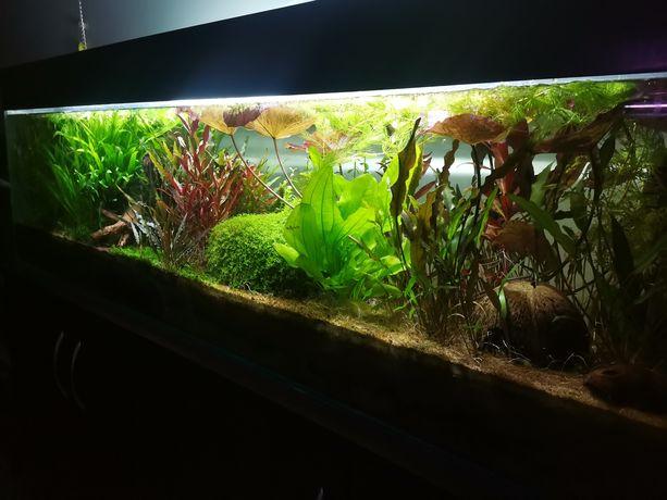 Rośliny akwariowe - sam dobierz zestaw