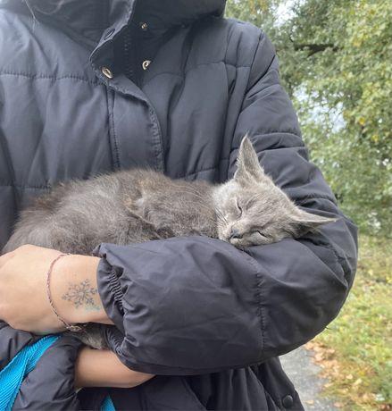 Найден котик 3 месяца срочно!