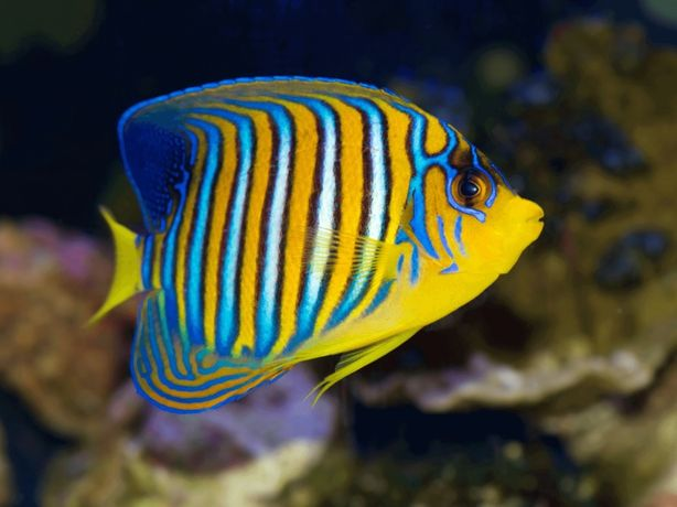 Sprzedaż ryb koralowców i zwierząt Morskich Mińsk Mazowiecki Akwarium