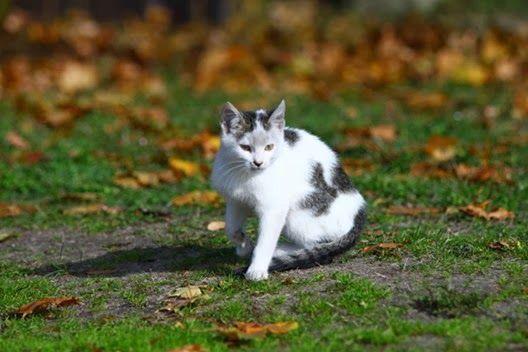 Koty kotki kocięta