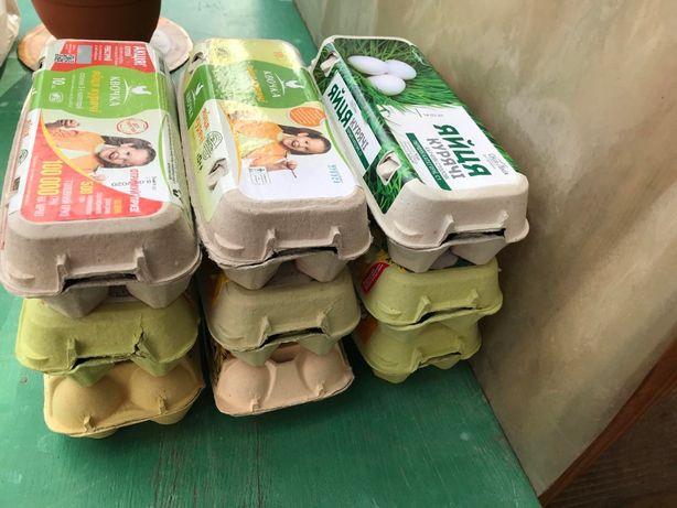 Лоток (коробка) для яиц на 10 шт.