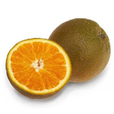 "Апельсин ""Шоколадный"" (Navel Chocolate) комнатный."