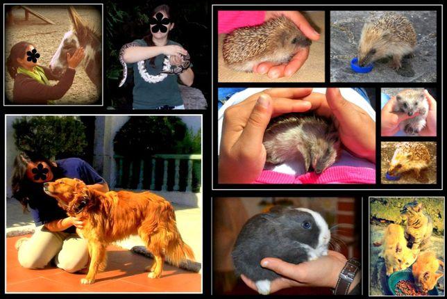 Pet Sitting, Dog Walking - Cuidados, Alimentação e Passeio Animal
