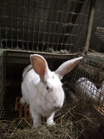 Продам кроликов термонська