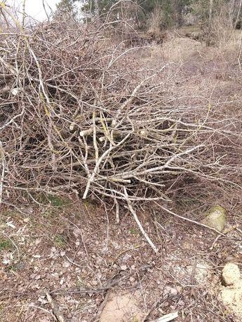 Oddam gałęzie, patyki