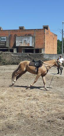 Vendo cavalo cruzado