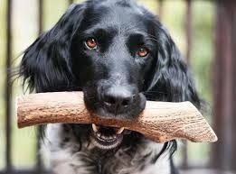 Рога северного оленя-- Лакомство и витамин для вашей собаки!Акция!