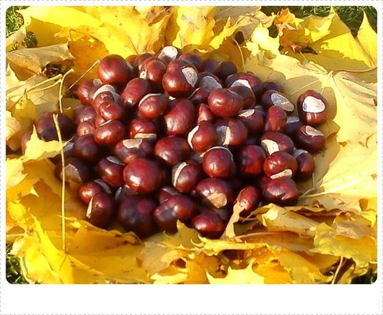 kasztany kasztan owoce kasztanowca figurki ozdoby stroiki nalewki