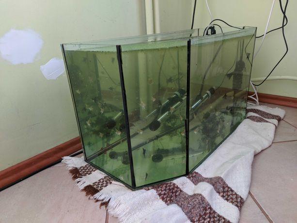 akwarium 70l z wyposażeniem i rybami