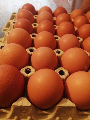 Jajka z chowu ściółkowego L HURT
