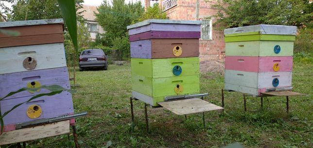 Улья с пчёлами ПАСЕКА