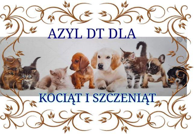 Azyl DT dla maluchów znalezionych
