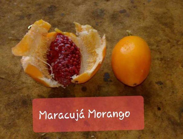 Maracujá Morango (Plantas)