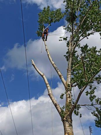 Wycinka drzew trudnych ! ! ! !