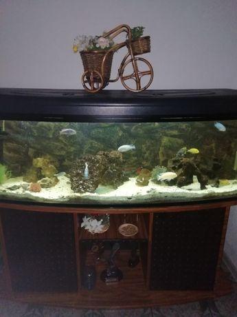 Akwarium 300l z szafką wyposażeniem i rybkami pyszczakami