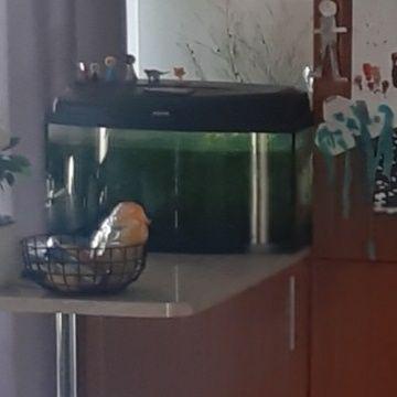 Akwarium aqunel 60 l