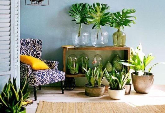 Lugar das plantas
