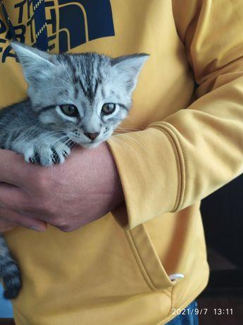 Котик в добрі руки.