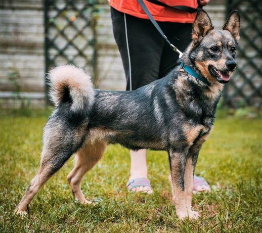 Aro ok. roczny piękny pies błaga o dom Karina