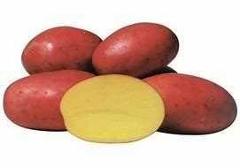 Batatas Mona Lisa e Laura