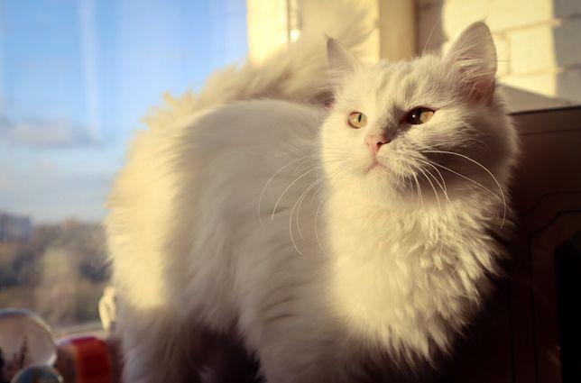 Белая Кошка в хорошие руки, 9 месяцев