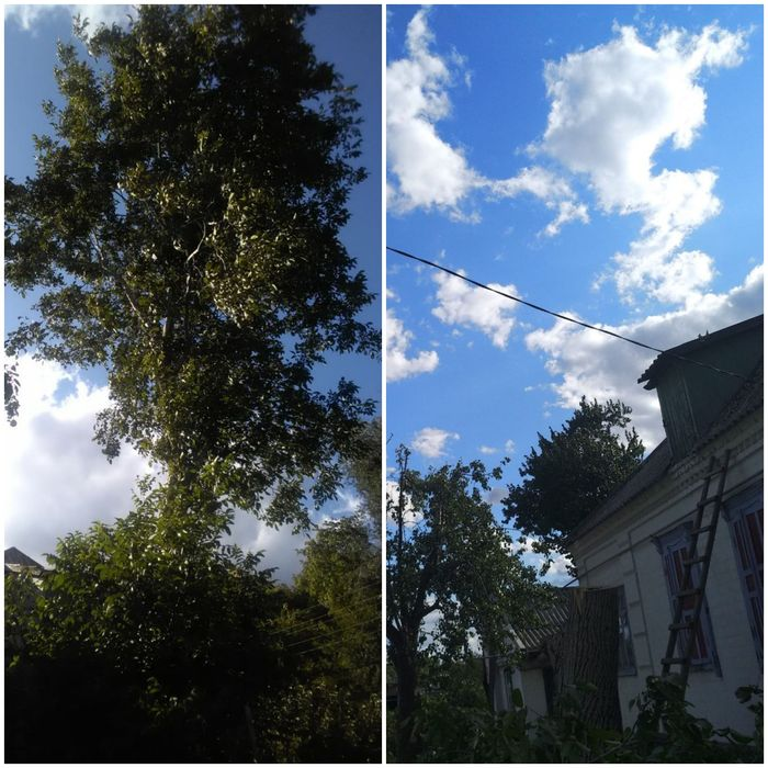 Спил деревьев любой сложности! Недорого Днепр - изображение 1