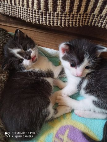 Trzy małe kotki do oddania. Rezerwacja