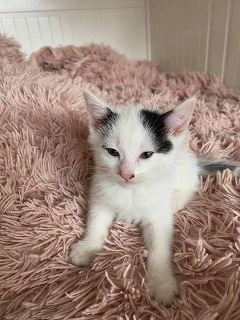 HENIO kotek do adopcji