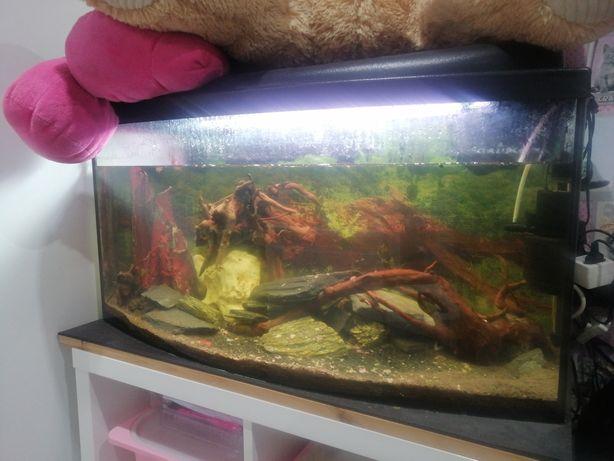 Akwarium panoramiczne 115L