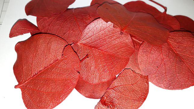 Listki liście dekoracyjne 100% naturalne ozdobne czerwone paczka 30g