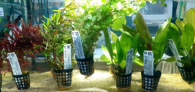 Roślin akwariowe - Sklep zoologiczny Skalar
