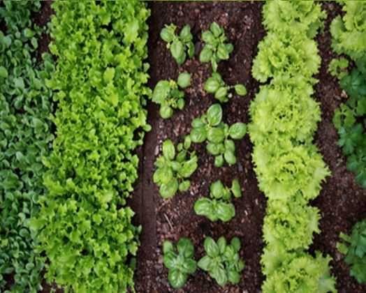 ZIEMIA DO OGRÓDKA pod warzywa kwiaty krzewy trawę kompostowa siana