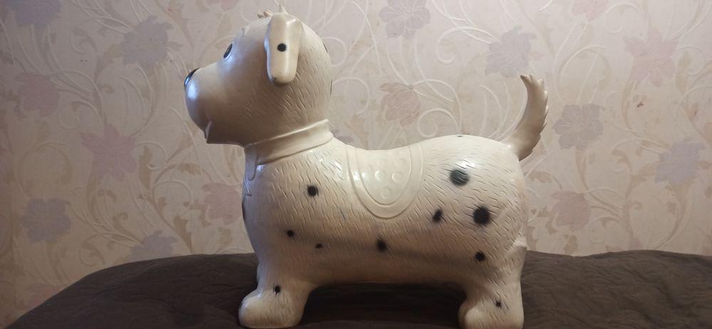 Любимая собака, попрыгунчик. Радость для детей. Киев - изображение 1