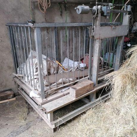Waga inwentarzowa, do bydła, żywca 1000 kg