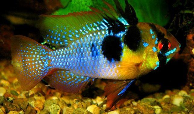 rybki w atrakcyjnych cenach.Rabaty, gratisy