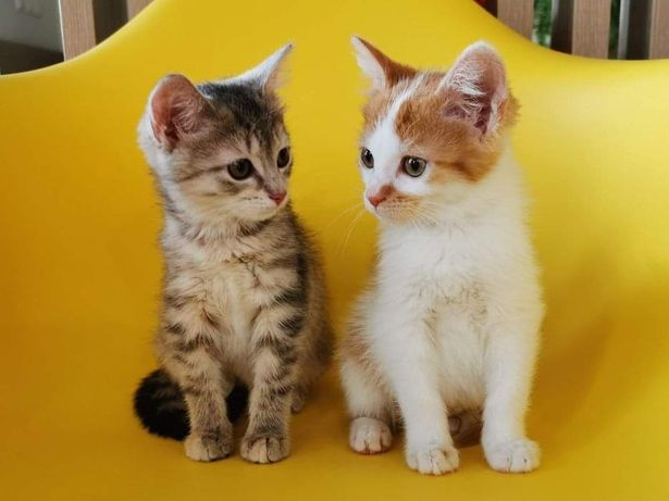 Kot Kotka - Kocie rodzeństwo szuka domu
