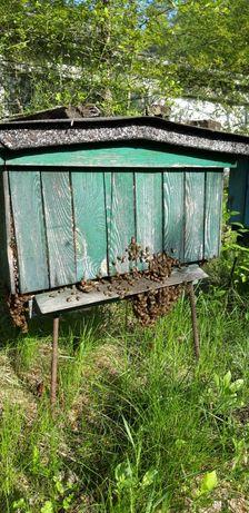 Sprzedam rodziny pszczele wraz z ulami