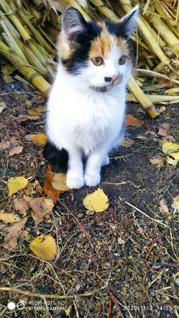 Кошечки ищут дом