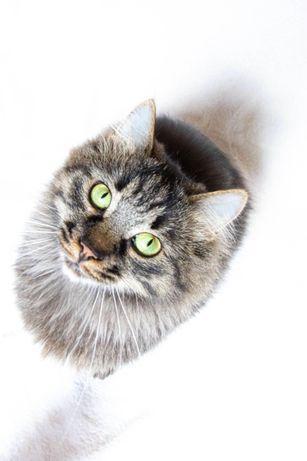 Кот камышовый окрас пушистый лесной кот кастрированный