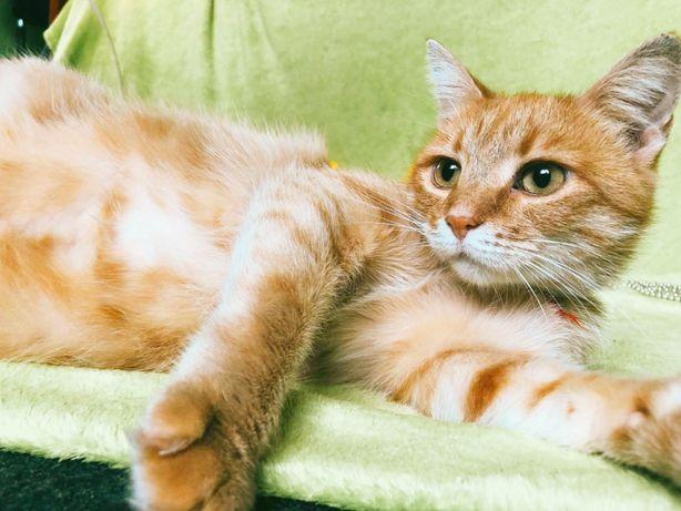 Кошка с золотым характером ищет дом!